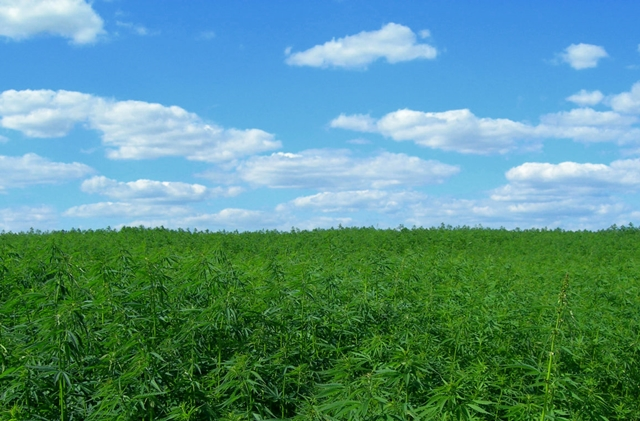 Kentucky Embraces Industrial Hemp and Sets Sights on Cannabis Reform