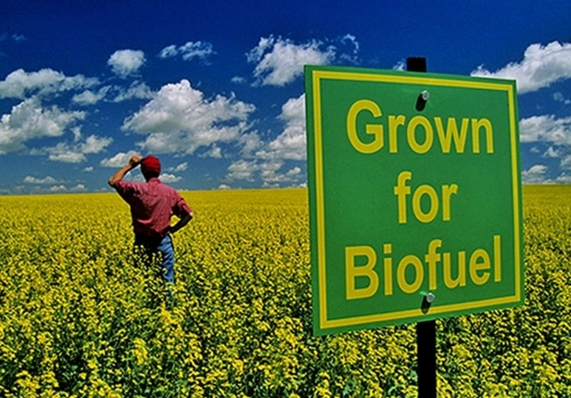 Hemp Biofuels to Save The World, Source: http://ipress.ua/media/gallery/full/g/r/grovfuel.jpg