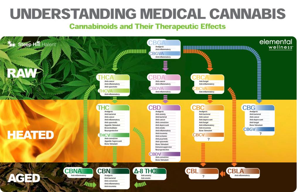 cannabinoid profiles a crash course in cbga