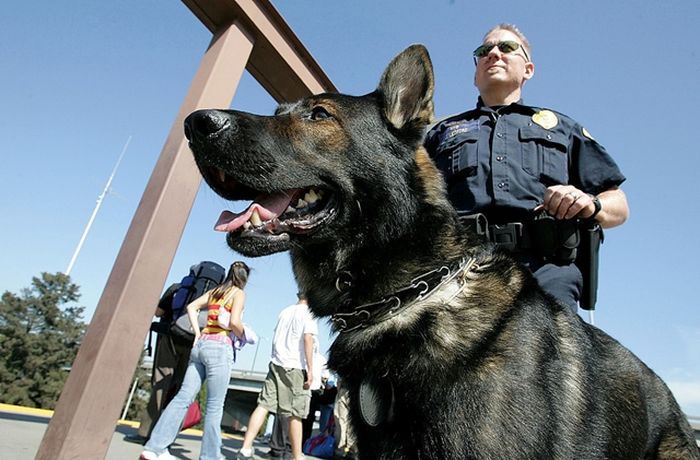 Drug Dogs search for cannabis at the border.