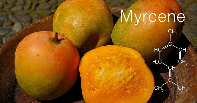 Image result for myrcene terpenes
