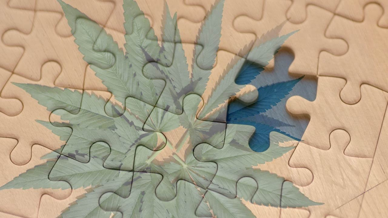 Cannabis and cognition